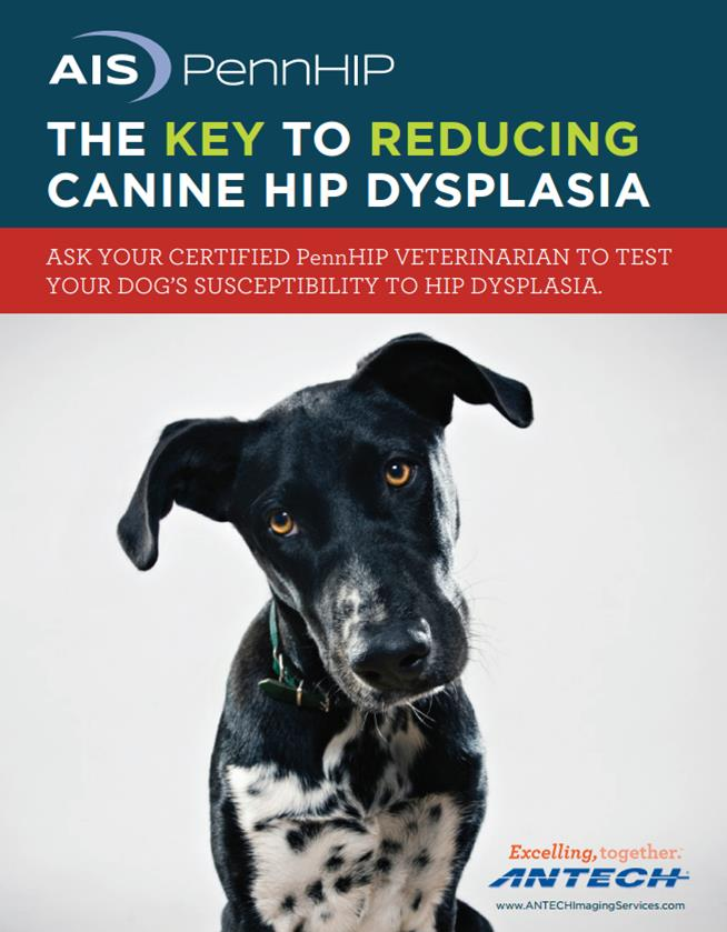 Pennhip Certification For Hip Dysplasia X Rays Vets North