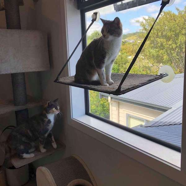 Cattery auckland - cat sitting by window