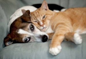 Cat and Dog exporting
